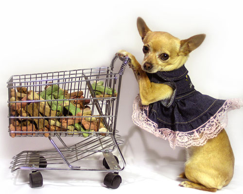 il migliore davvero comodo più amato Accessori cani - Cosa acquistare per accogliere al meglio il ...